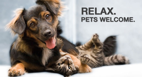 pet-friendly-new-york-city-service-dogs